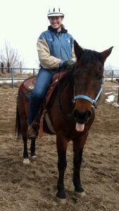 equine law horse attorney liability insurance