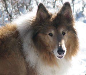 animal lawyer animal trusts pet trusts wills massachusetts