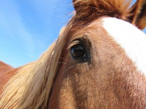 Mustang Aubrey equine law horse law contracts estate planning trademark